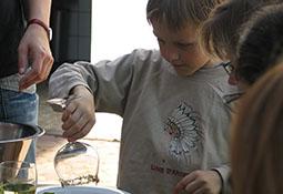 Herstellung eines Kräutercocktails
